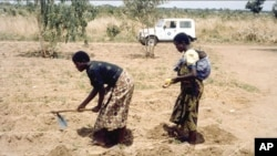 Women farming in Malawi.