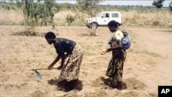 Perempuan Malawi dengan anak di punggungnya bekerja di ladang (foto: dok). Ibu hamil dan wanita yang sedang menyusui yang terinfeksi AIDS di negara itu menerima pengobatan seumur hidup.