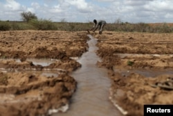 FILE - A farmer works in an irrigated field near the village of Botor, Somaliland, April 16, 2016. A severe El Nino-related drought hit in 2015 and 2016.