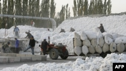 Migrant workers unload and pack cotton picked from fields in Korla, 10 October 2006