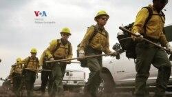 Susah Nggak Ya: Diaspora Indonesia Pemadam Kebakaran Hutan di California
