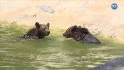Lemurlara Meyve Kokteyli Atlara Yağmurlama