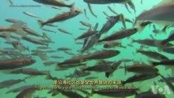 走进美国:浮游动物超乎想象的能力