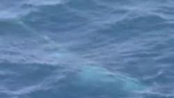 南韓準備以科研理據捕鯨