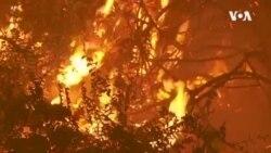 加州野火肆虐 特朗普宣布加州為重災區