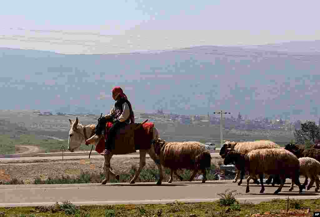 A Turkish boy, riding a donkey, herds sheep along the Syrian border near the Turkish town of Reyhanli in Hatay province, Turkey, March 21, 2012. (AP)