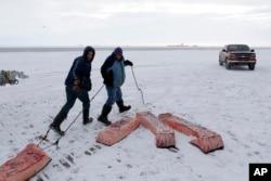 미국 알래스카주 배로 시 인근에서 식용 북극고래 껍질과 지방 부위을 운반하고 있다.