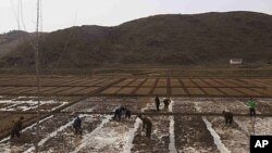 People work in a field outside of Kaesong, North Korea, April 17, 2011. North Korea's perennial food shortage reached a crisis point in 2011, aid workers say, because of torrential rains, the coldest winter in 60 years and rising food prices.