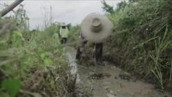 干旱笼罩泰国 稻农苦不堪言