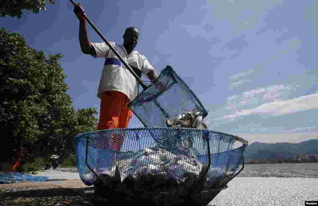 برازیل میں ہزاروں مچھلیاں ہلاک