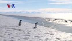 New Agreement to Preserve Antarctica Marine Life
