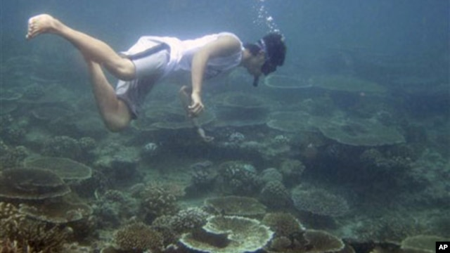 An environmental activist surveys coral reefs off Aceh Besar, Aceh province, Indonesia. Coral that survived the 2004 tsunami is now dying at one of the fastest rates ever recorded because of a dramatic rise in water temperatures off northwestern Indonesia