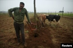 Farmer Juan Hernandez prepares the land to plant tobacco at a tobacco farm in Cuba's western province of Pinar del Rio, Jan. 26, 2016.