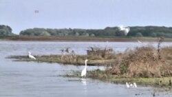 Wetlands and Wildlife Return to Scenic Romanian Delta