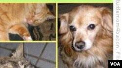 Pemerintah Swiss tahun 2008 telah mengeluarkan peraturan yang melindungi banyak jenis hewan piaraan.