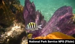 Underwater view at Dry Tortugas National Park NPS Photo taken by John Dengler