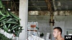 Dưa chuột bị mang đi tiêu hủy tại Romania, 06/06/2011