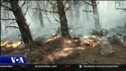 Zjarret në pyjet e Shqipërisë