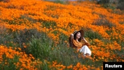 A woman sits in a super bloom of poppies in Lake Elsinore, California, U.S., February 27, 2019.