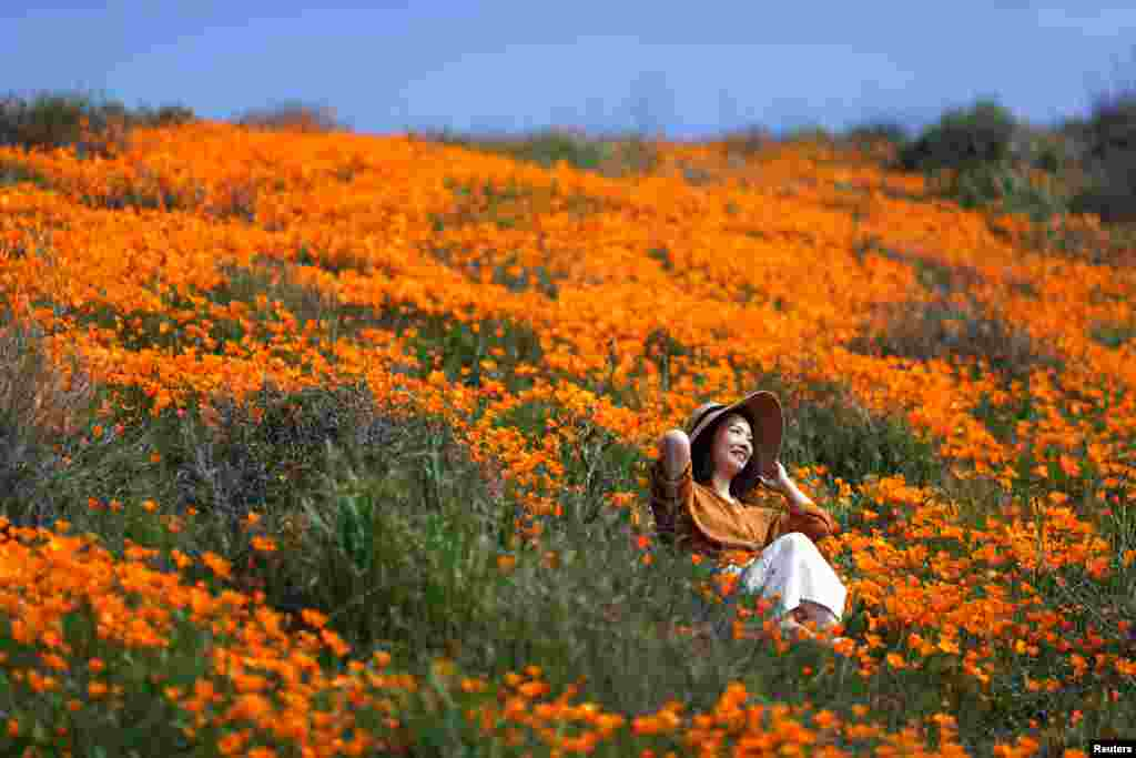 A woman sits in a super bloom of poppies in Lake Elsinore, California, Feb. 27, 2019.