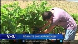 Të rinjtë dhe agrobiznesi