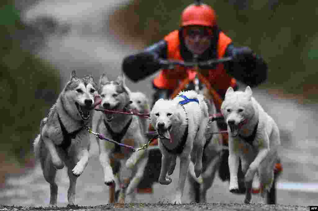A musher competes with his team of dogs in a race in The Siberian Husky Club of Great Britain 36th Aviemore Sled Dog Rally 2019 in Aviemore, Scotland, Jan. 26, 2019.