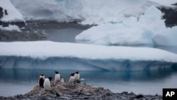 FILE - Gentoo penguins stand on rocks near the Chilean station Bernardo O'Higgins, Antarctica, Jan. 22, 2015.