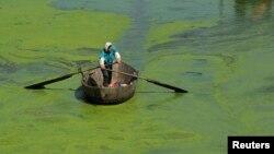 Tảo tràn ngập Hồ Sào ở Hợp Phì, An Huy, Trung Quốc, 3/6/2013. REUTERS/Stringer