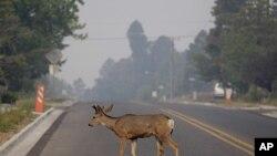 7月1号洛斯阿拉莫斯弥漫着附近地区飘来的野火烟雾