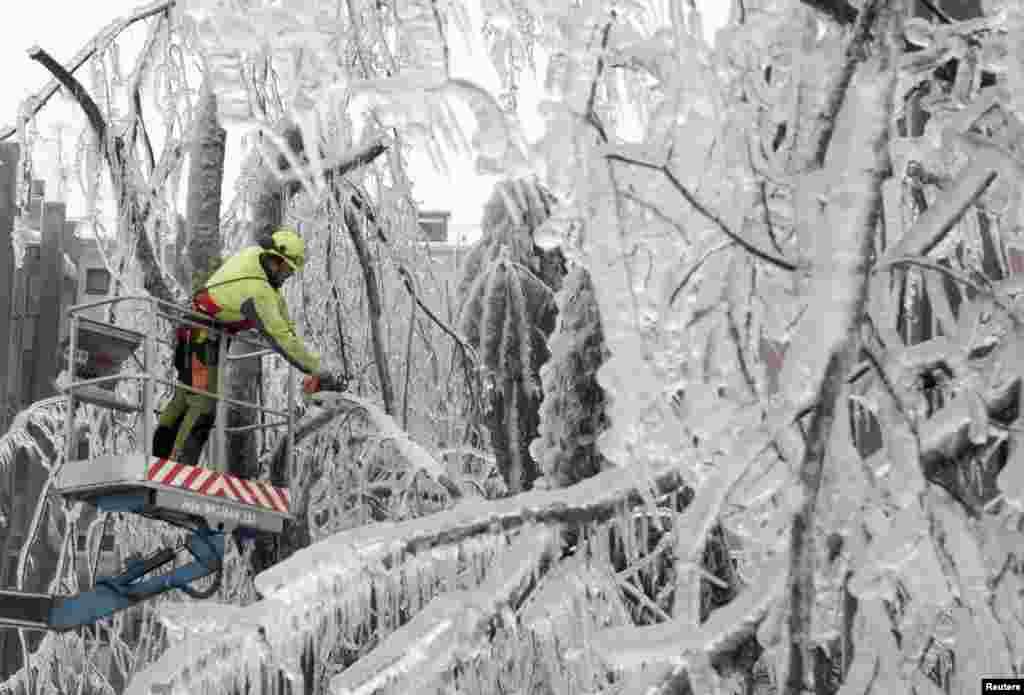 Công nhân cưa những nhánh cây bị băng bao ở Postojna, Slovenia.