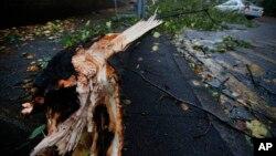 강력한 폭풍이 영국과 독일 등 유럽 북서부를 휩쓴 가운데 거센 바람의 영향으로 부러진 나무가 인도를 가로막고 있다.