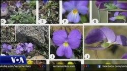 Shqipëri: Zbulime të rëndësishme në botanikë