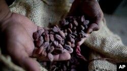 Radnik pokazuje sušeno semenje kakaoa na plantaži u Venecueli.
