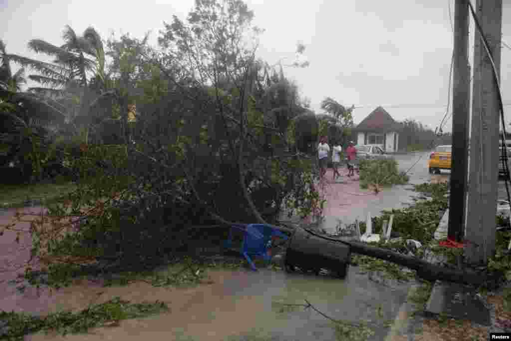 Ernesto arrancó varios árboles en Mahahual.