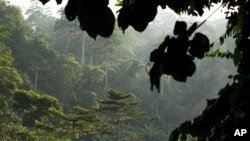 La forêt du parc national de Kakum au Ghana
