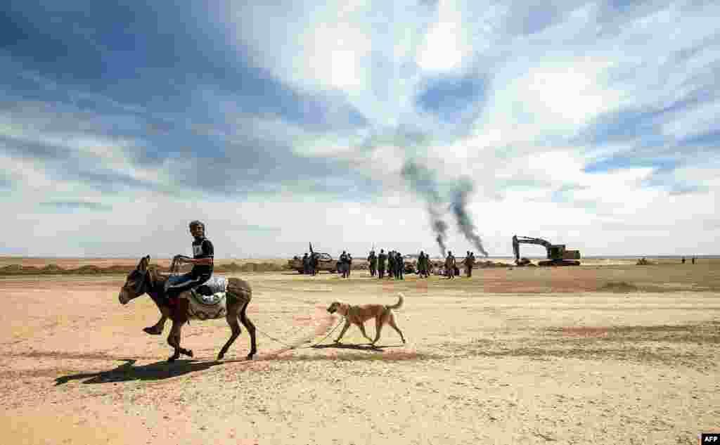 Seorang pemuda Irak mengungsi dengan naik keledai diikuti oleh anjingnya di Hatra, barat daya Mosul.