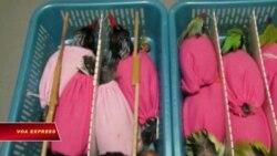 Bị tù vì vận chuyển 100 loài chim hiếm quý từ Việt Nam sang Mỹ