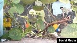စစ္ေကာင္စီတပ္ေတြ လာေရာက္ဖမ္းဆီးစဥ္ ဗိုလ္တေထာင္ ၄၄ လမ္း ေလးထပ္တိုက္ေပၚကေန ခုန္ခ်ၿပီးကတၱရာလမ္းေပၚက်ခဲ့တဲ့ လူငယ္ငါးဦး (ဓါတ္ပံု-ေပးပို႔)