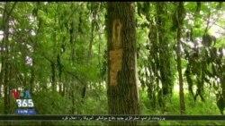 ساخت سیستمی برای ثبت علایم حیاتی درختان