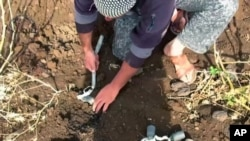 FILE - In this still image made from video taken May 19, 2015 provided by the Syrian Center for Demining and Rehabilitation, a volunteer deminer collects several cluster munitions from the ground in Daraa, Syria.