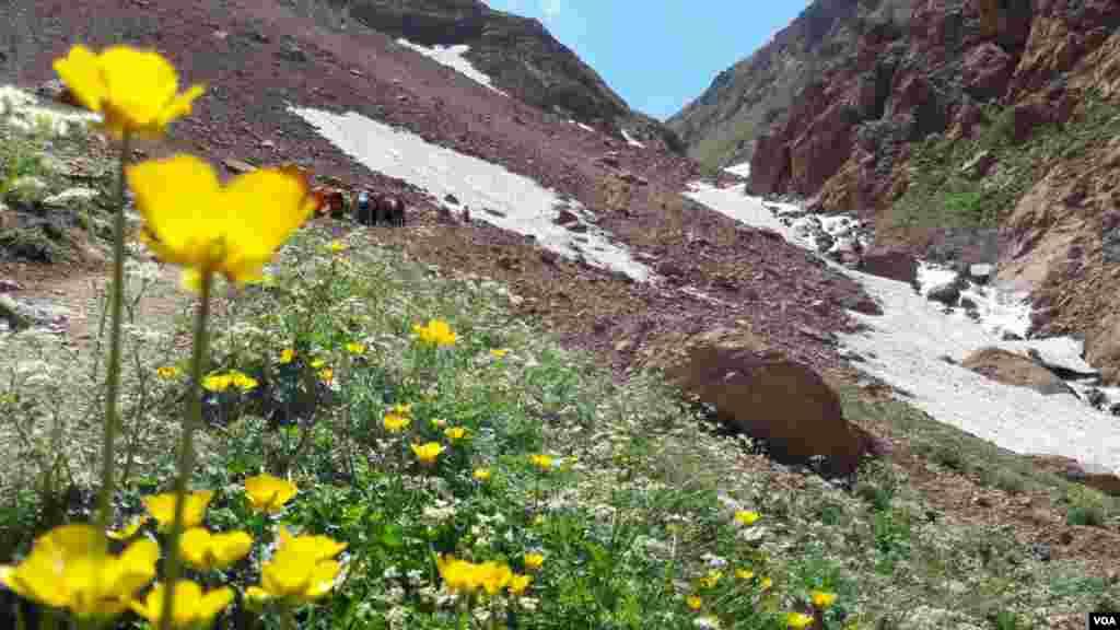 طببعت زیبای علم کوه مازندران عکس: مجید از اصفهان (ارسالی شما)