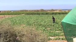 Tunnel Closures Hit Gaza Farmers