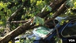 一辆汽车2012年7月1日在马里兰州贝塞斯达的一场暴风雨中被一颗倒塌的树砸中