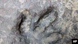 ڈاینوسار کے پاوں کا نشان (فائل)