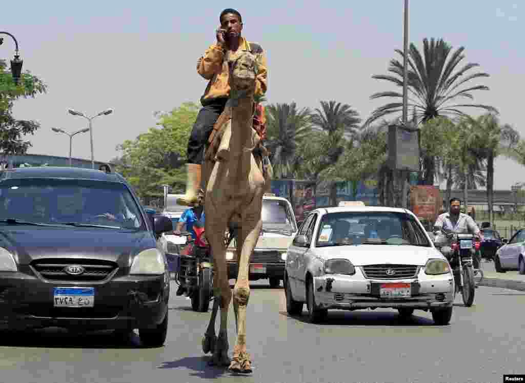 Một người đàn ông vừa nghe điện thoại di động vừa cưỡi lạc đà qua một chỗ ùn tắc giao thông ở trung tâm thành phố Cairo, Ai Cập.