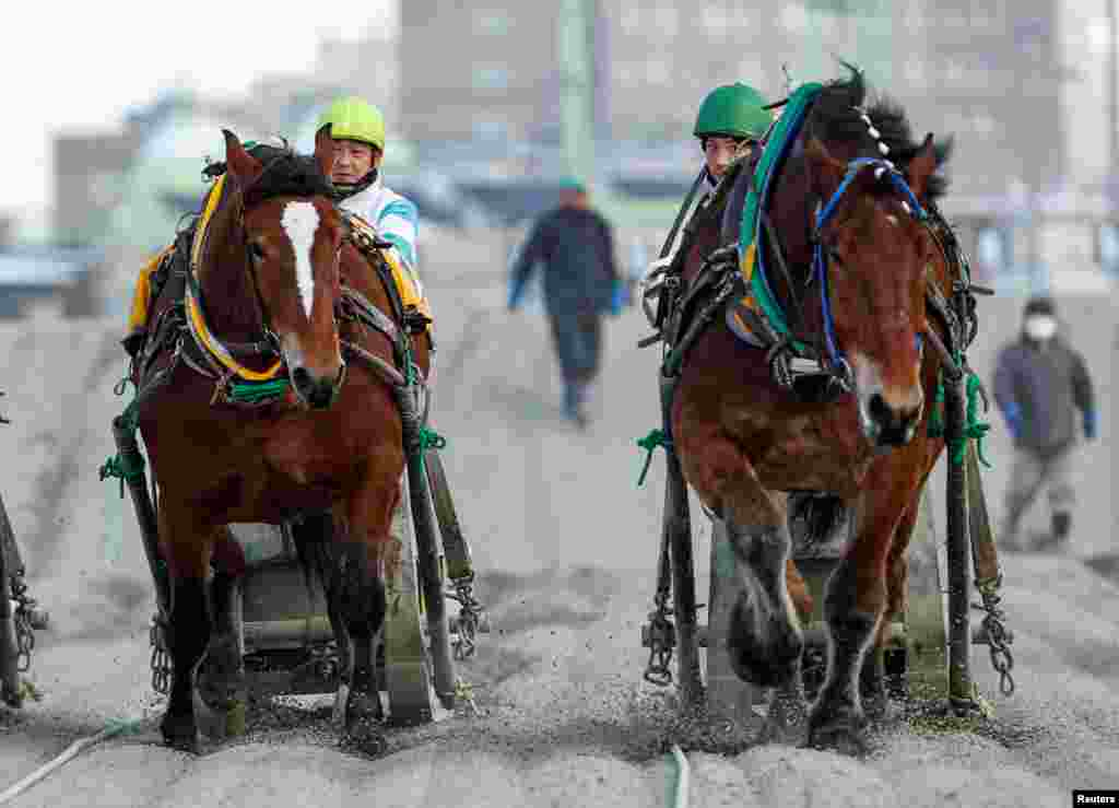 Jokceys and 'Banei' horses compete during their 'Banei' Keiba race, a form of farm horse racing, at Obihiro 'Banei' horse Race Track in Obihiro, Hokkaido, Japan.