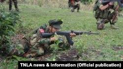 (TNLA news & information )