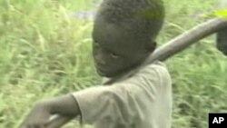 Les enfants sont surtout utilisés dans le secteur agricole, mais aussi les services