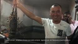 Empresa chinesa exporta lagosta viva de Moçambique
