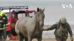 Giải cứu ngựa mắc kẹt dưới bùn ở Anh